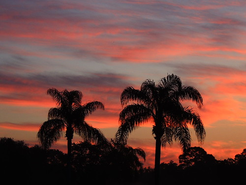 morning red wallpaper orange sun blur color tree weather silhouette yellow night clouds sunrise landscape dawn flickr purple florida cloudy palm bradenton mullhaupt cloudsstormssunsetssunrises jimmullhaupt