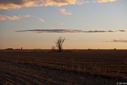sunset tree field evening kansas tailwaterpit