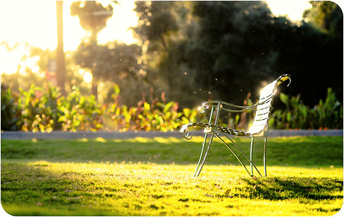 park light sunset grass yellow bench nikon focus dof bokeh 100mm manual f28 d300s