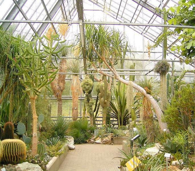 Jardineros en acci n claves para el cultivo de plantas for Plantas para invernadero