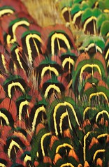 Plumage, red and green