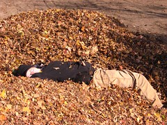 Napping in the Leaf Pile