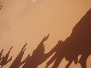 Sahara - shadow caravan