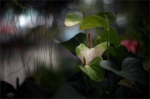 ...my bokeh jungle....