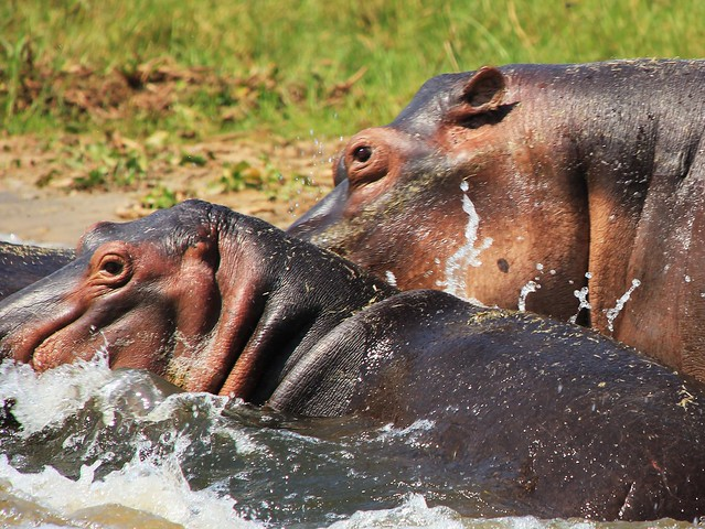 Uganda, Murchison Fall National Park