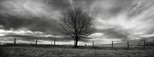 sky bw tree nature clouds landscape ir blackwhite noiretblanc pentax dramatic highcontrast infrared 1855 twop da1855 justpentax pentaxk100dsuper smcpentaxda1855mmf3556 k100ds ir720 pentaxart tianyair720nmfilter