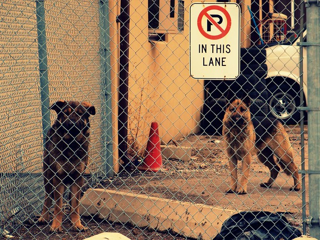 Friendly Guard Dogs