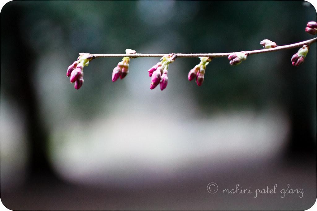 arboretum blossoms #3