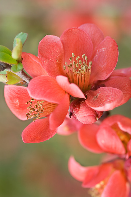 Primavera en rojo