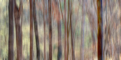 blur tree sc nature forest photographer southcarolina fantasy trunk greenville clemson scbotanicalgarden takeawalkwithme naturewalkphotography lynnpilewski