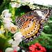 2011.04.01 - Butterfly Garden, Penang