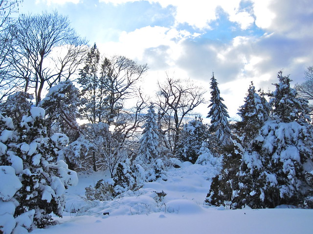 A beautiful view near the Rock Garden after a heavy snow. Photo by Rebecca Bullene.