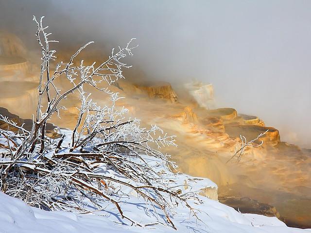 IMG_2182 Travertine Terrace, Mammoth Hot Springs, Yellowstone National Park