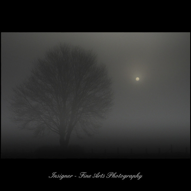 fog series - early morning with tree and fog