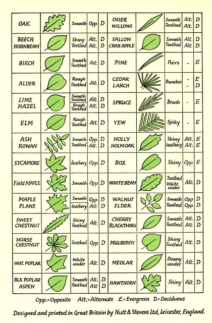 tree seed identification chart survival and self. Black Bedroom Furniture Sets. Home Design Ideas