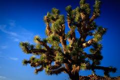 Joshua Tree national park-1.jpg