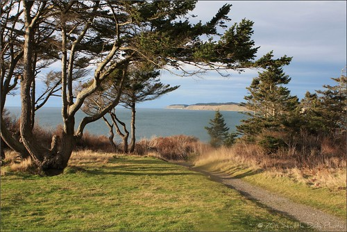 trees winter sunset grass landscape shadows path brush cliffs trail pugetsound fortcasey whidbyisland seattledailyphoto 5tha sdpmi