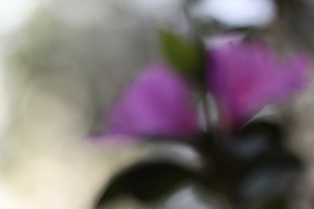 in the blur of a bloom