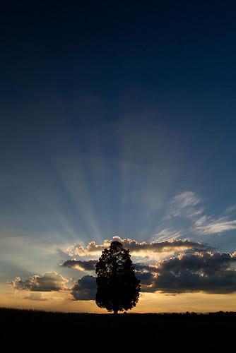 blue sunset sky orange cloud sun tree silhouette clouds canon landscape golden manassas dcist modified battlefield bullrun lonetree sunbeams crepuscularrays crepuscular godbeams jacobsladder manassasnationalbattlefieldpark battleofbullrun eos7d tklancer