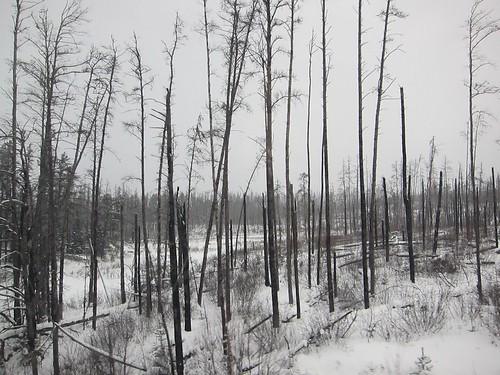 Winter in Northern Ontario