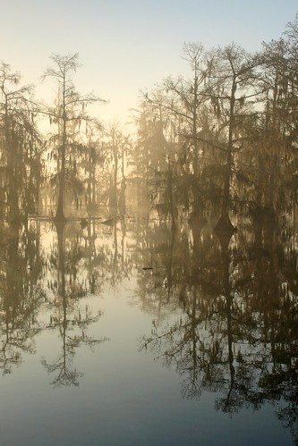 morning light mist lake reflection water fog sunrise golden la moss louisiana lafayette south swamp layers cypress acadiana lakemartin breauxbridge benpierce