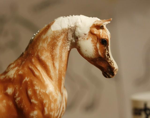 Classic Arabian Stallion