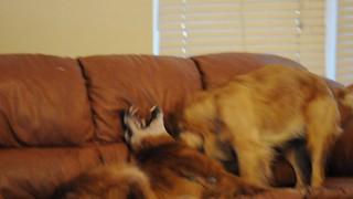 Zeke and Garnet wrestling