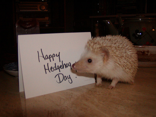 hedgehog_day
