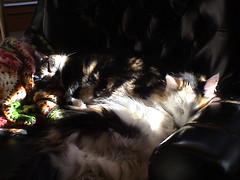 2 Cat Sunny Nap
