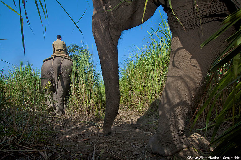 Rangers on patrol with elephants