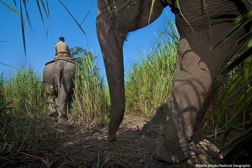 Rangers on patrol with elephants