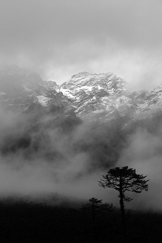 india sikkim yumtangvalley indiadarjeelingsikkim2009yumthangvalleylachung