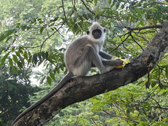 animal, branch, monkey, mammal, fauna, new world monkey, jungle, wildlife,