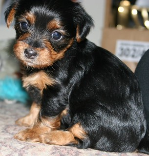 I am getting a dog!!!! :D