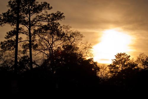 trees sunset sky nature silhouette georgia albany doughertycounty thesussman sonyalphadslra200 project36612011