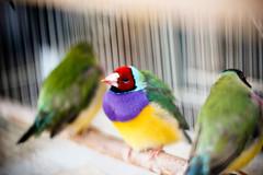 The (ViewSonic) birds