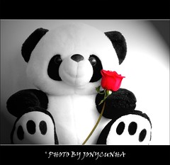 TODA MULHER MERECE UMA FLOR - AO DIA INTERNACIONAL DA MULHER...Every Woman Deserves a Flower - To International Women's Day