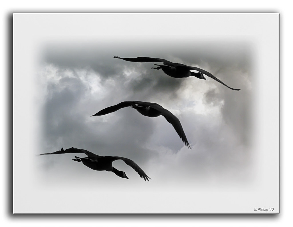 Silhouette Geese