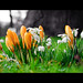 Signs of Spring by Ian Livesey