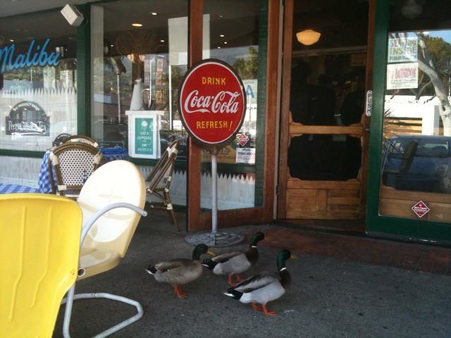 ducks at Malibu Kitchen