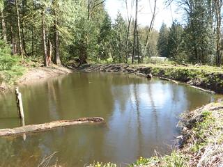 Pond Full