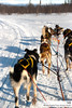 Natalia Robba Photography = Dogsledding in Kiruna