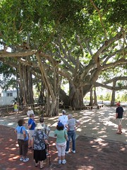 The Banyan tree at Jupiter Lighthouse