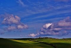 Devon Countryside: sheeps in the field