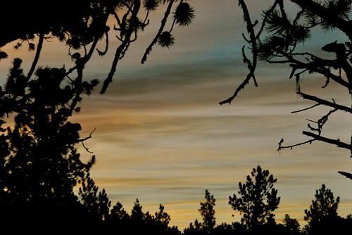 forest sunrise golden nikon sd evergreens blackhillsnationalforest