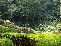 美如仙境的私闢休息區,卻是佔用自然公園,造成生態災難。(圖:柴山會部落格)