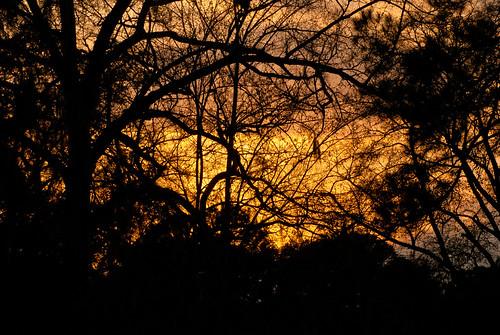 trees sunset orange nature silhouette georgia albany doughertycounty thesussman sonyalphadslra200