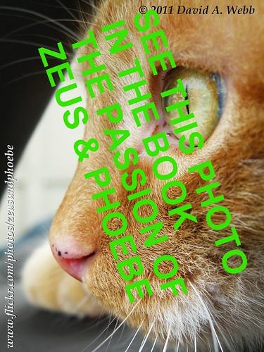 pink red orange usa macro green eye up yellow tom cat fur nose ginger utah kat feline chat flickr dof close olympus whiskers zeus gato katze freckles 猫 macska pupil provo кошка 2011 γάτα supershot pisică