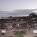 Laysan Island 2011 Tsunami