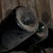 Castellroig, vins de terrer - 20